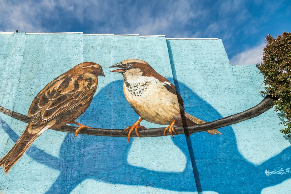 If you live in Queen Village, you should check out the Bickering Birds Mural.